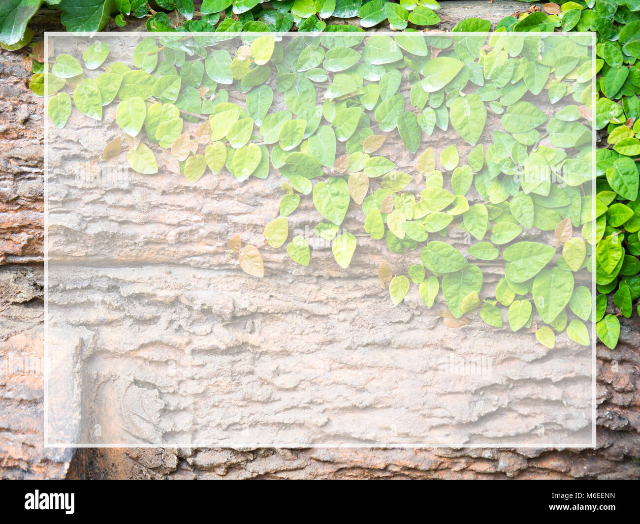 Green leaves stuck on wood White frame for text and content input (Copy Space). Suitable for as background. Stock Photo