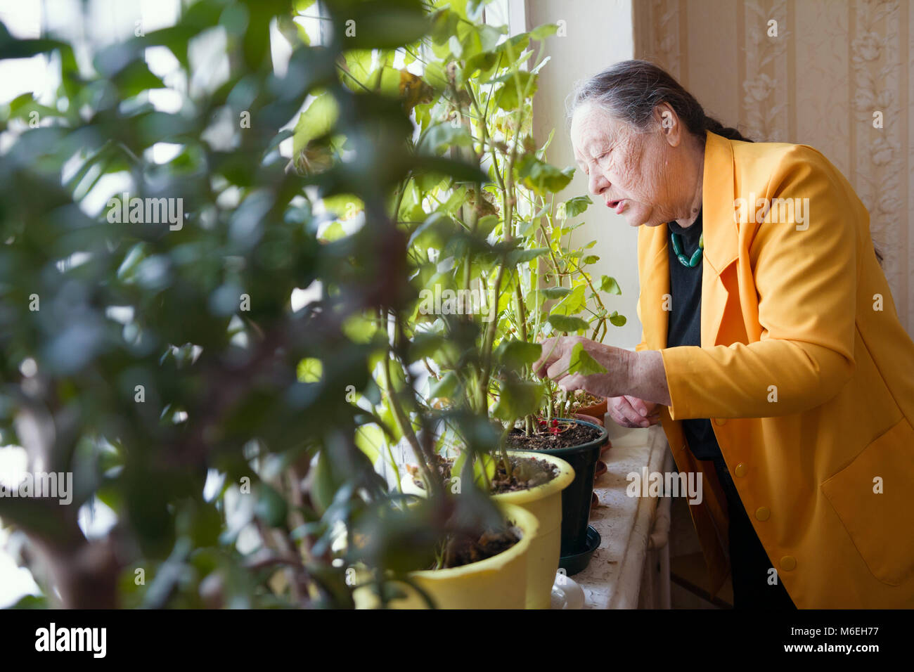 Old lady in the yellow jacket at the window with flowers - Stock Image