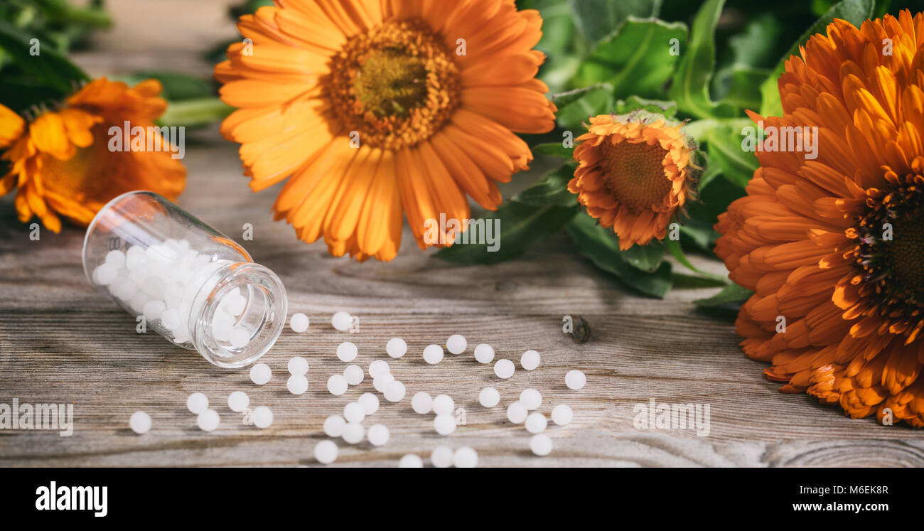 Calendula alternative medicine. Fresh blooming calendula, pot marigold and white homeopathy pills on a wooden table - Stock Image