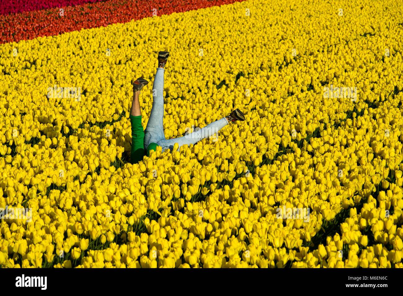 Couple having fun in a field of yellow tulips, Bollenstreek area, Noordwijkerhout, Netherlands - Stock Image