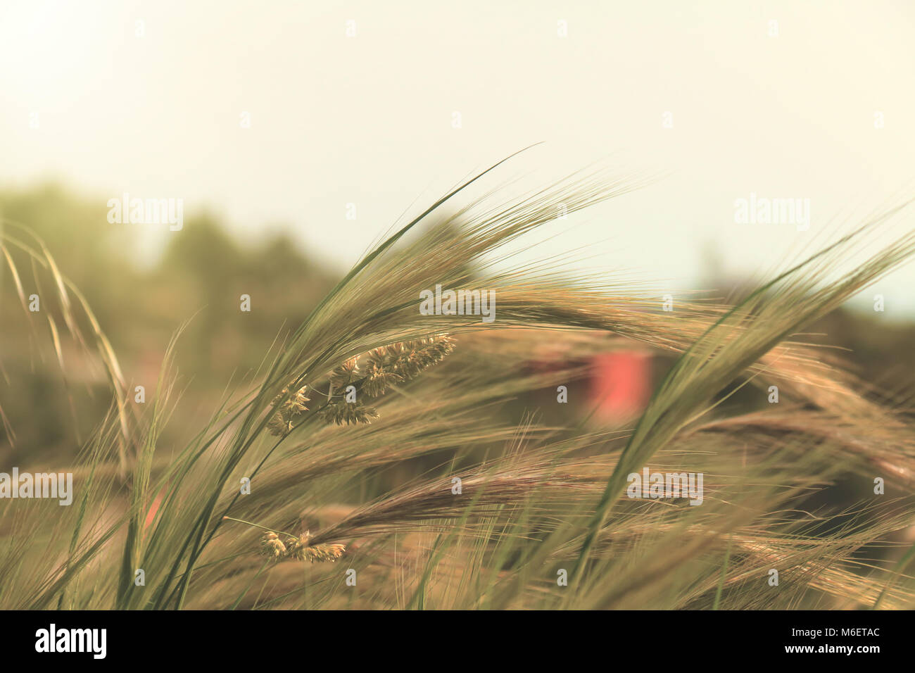 Landscape with wild plants - Stock Image