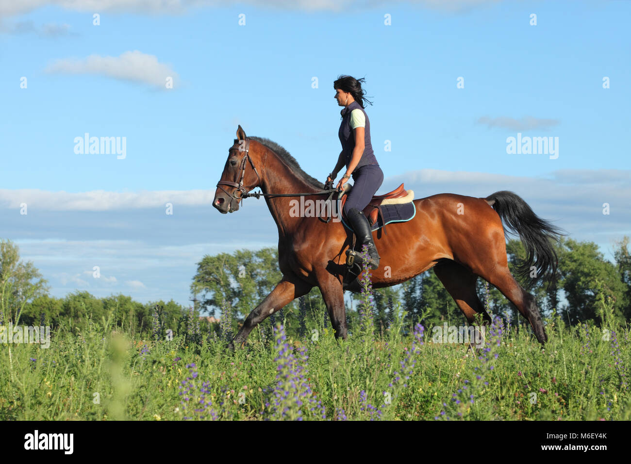 Galloping horse with female rider - Stock Image