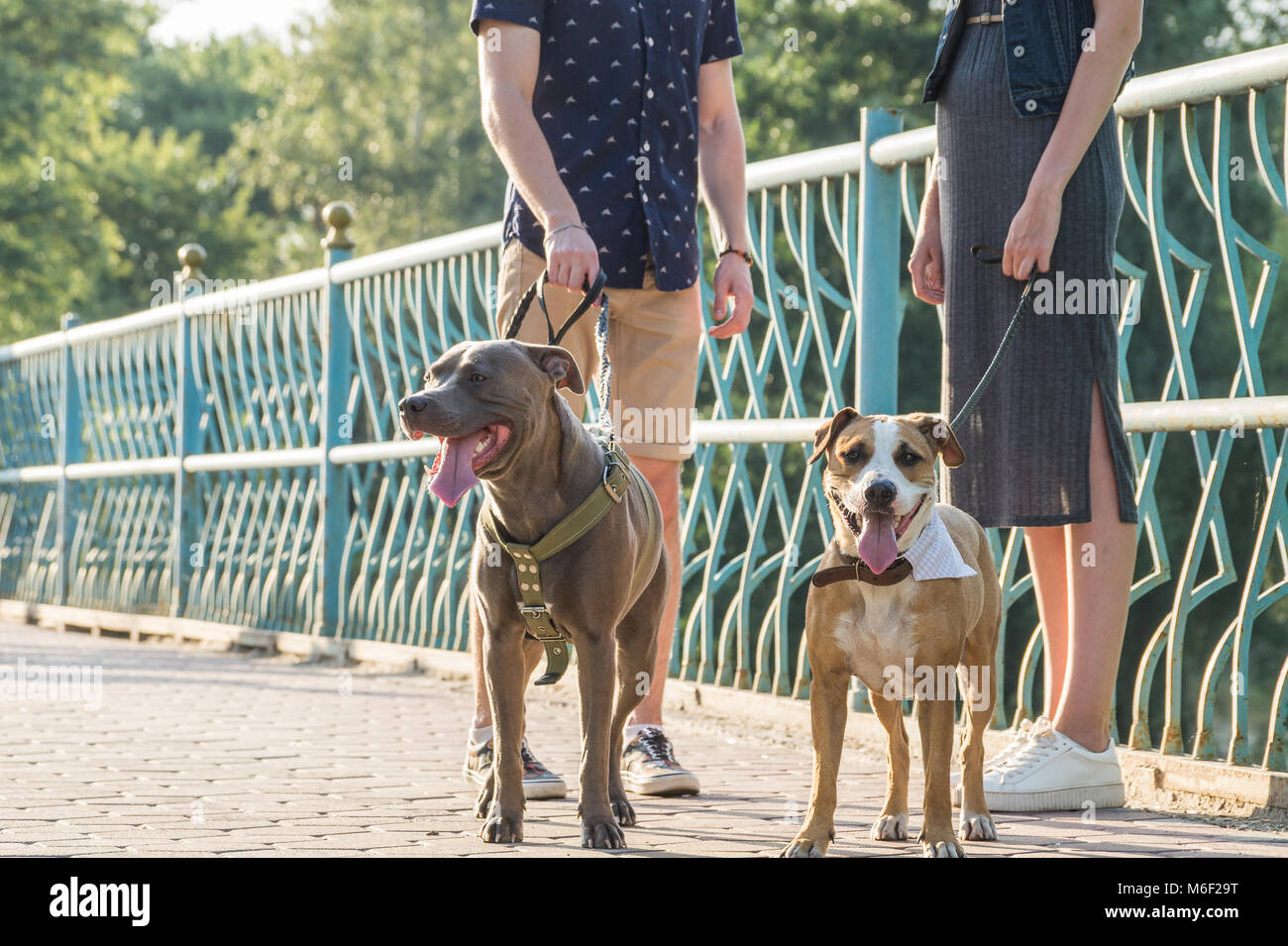 Male and female persons have a talk on a walk with pet dogs on a sunny day - Stock Image