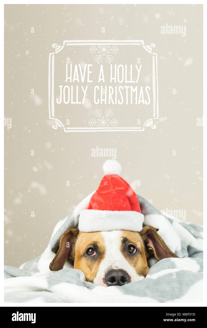 Merry Christmas postcard with funny puppy in Santa Claus hat - Stock Image