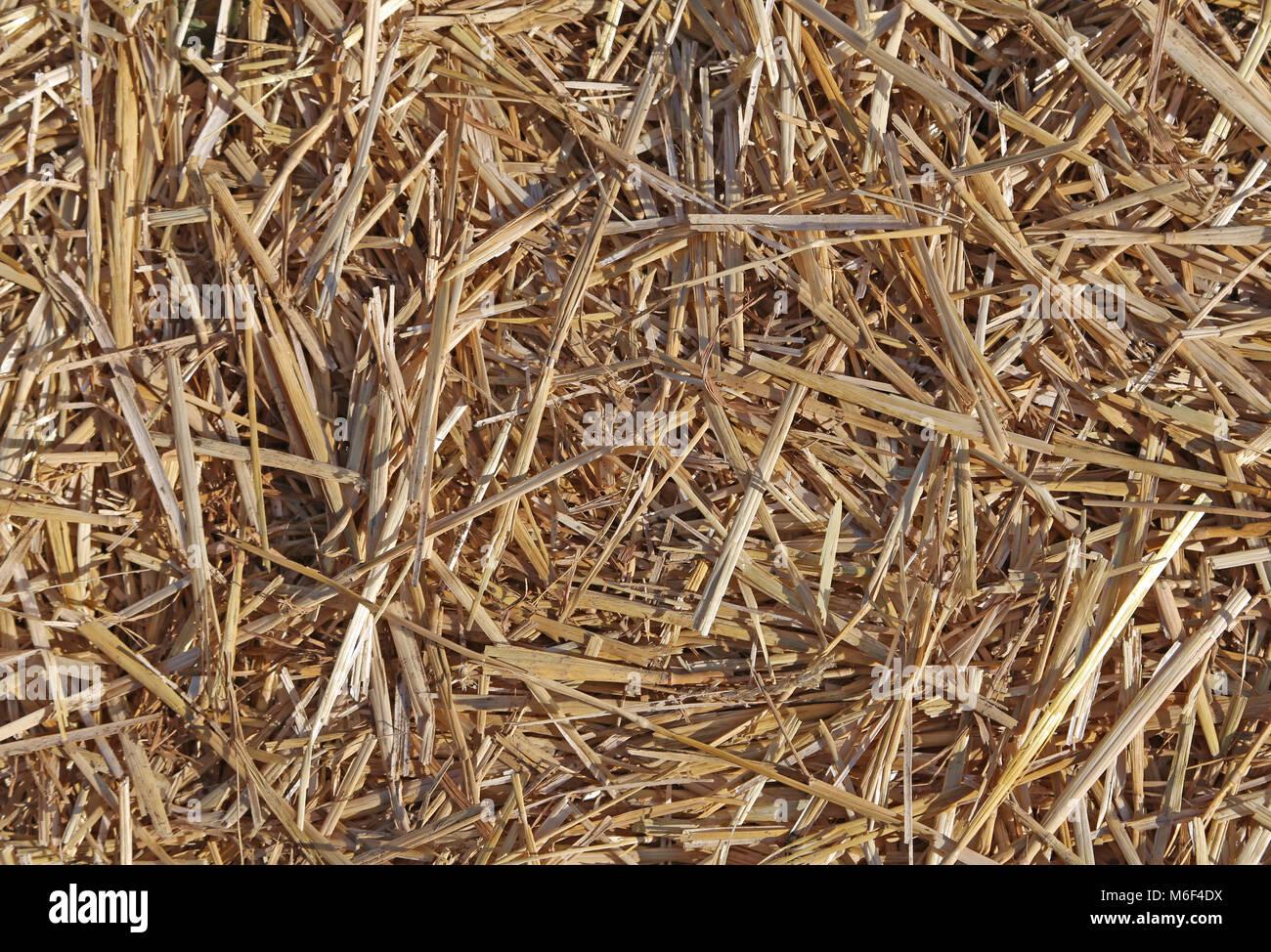 Bagno di fieno stock photos bagno di fieno stock images alamy