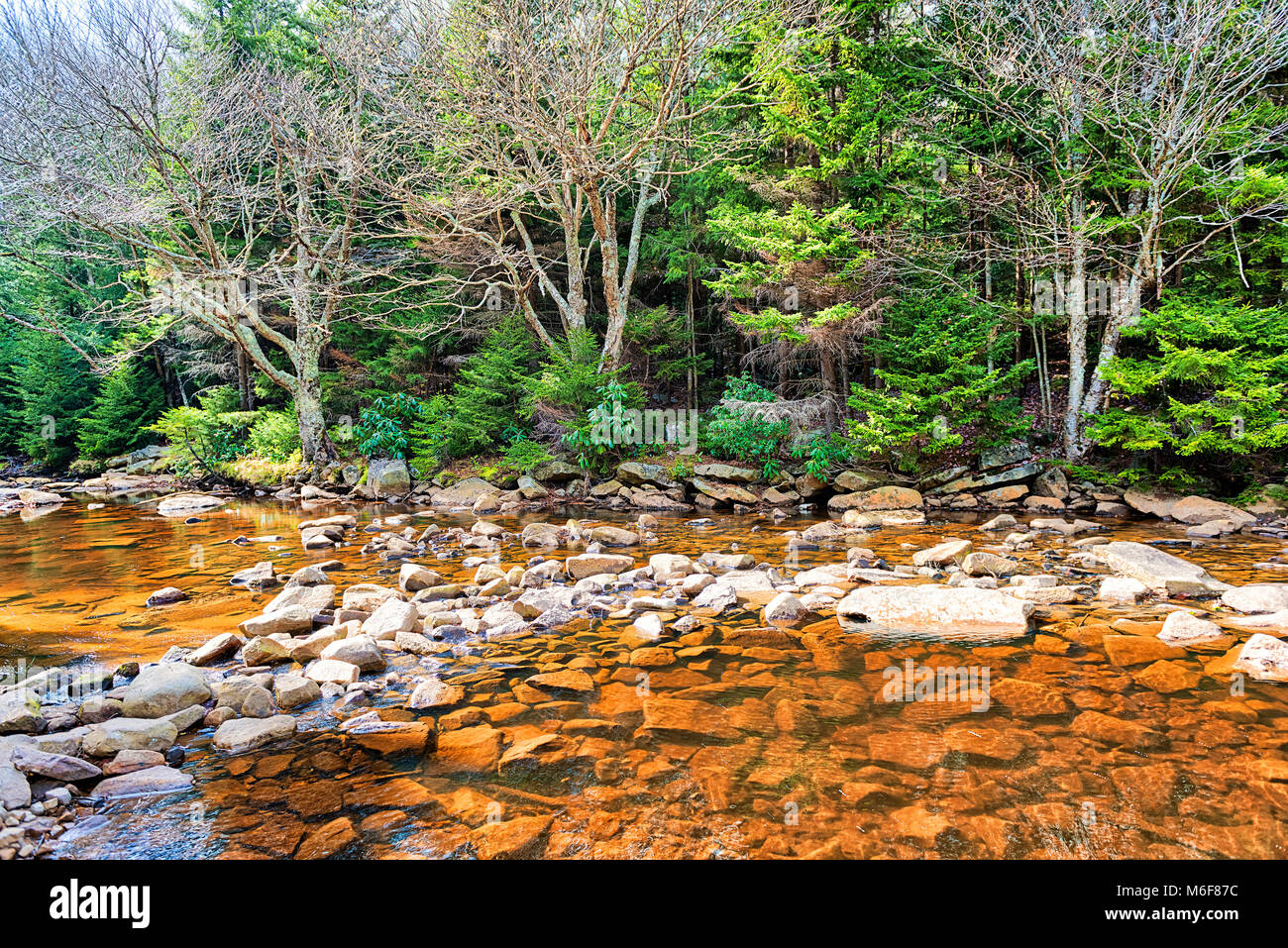 Red creek in Dolly Sods, West Virginia during autumn, fall with green pine tree forest and water river surface - Stock Image