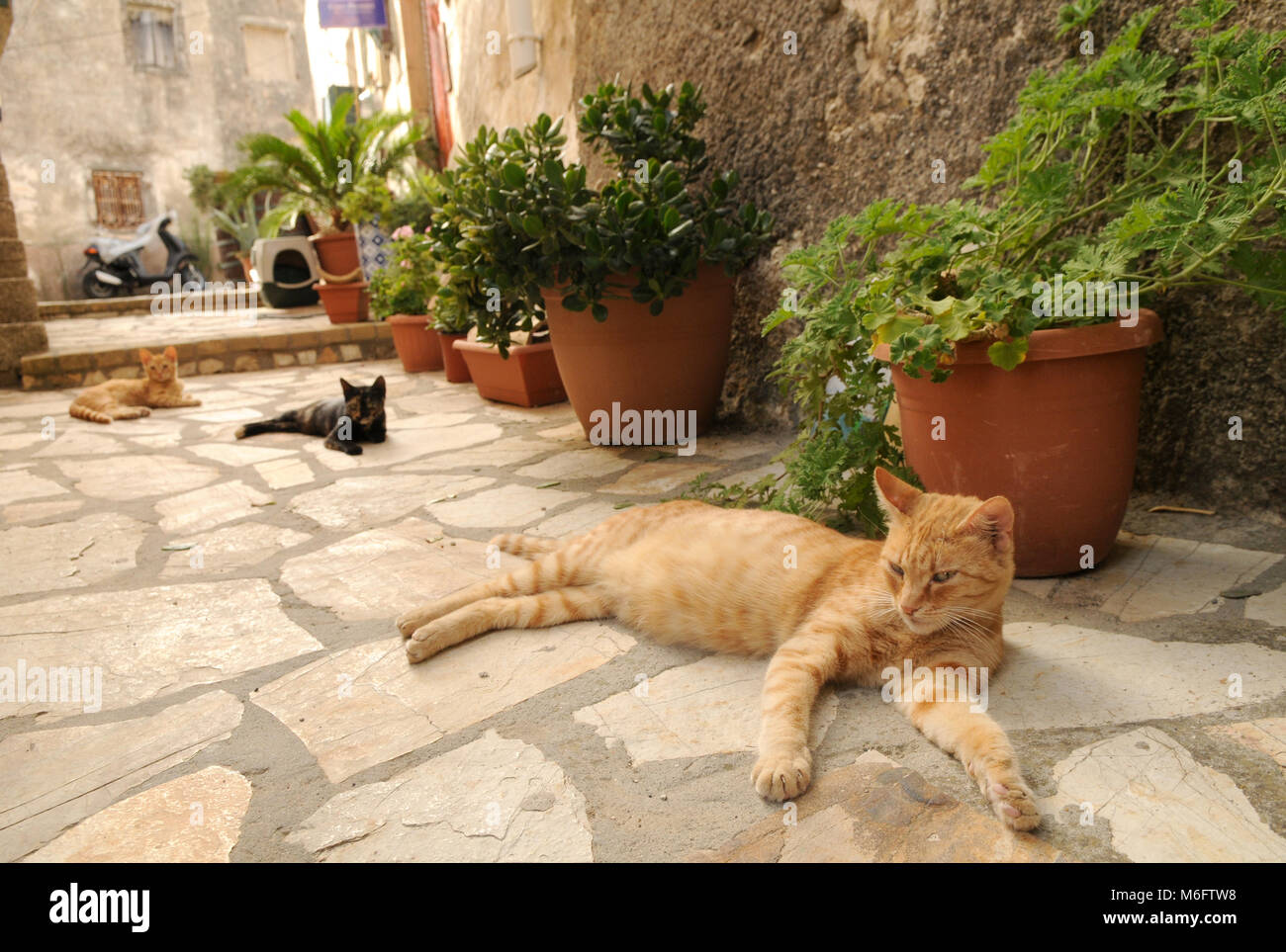 Three cats living in the streets of greek city Corfu - Stock Image