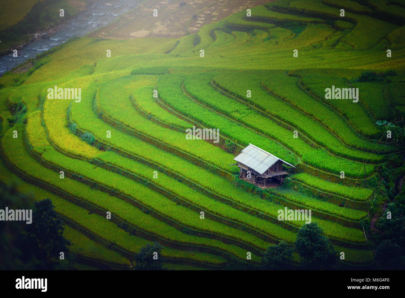 Rice fields on terraced with wooden pavilion at sunrise in Mu Cang Chai, YenBai, Vietnam. - Stock Image