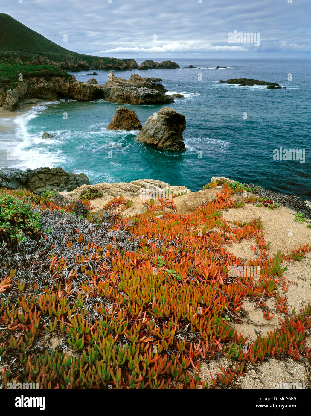 Ice Plant, Garrapata State Park, Big Sur, Monterey County, California - Stock Image