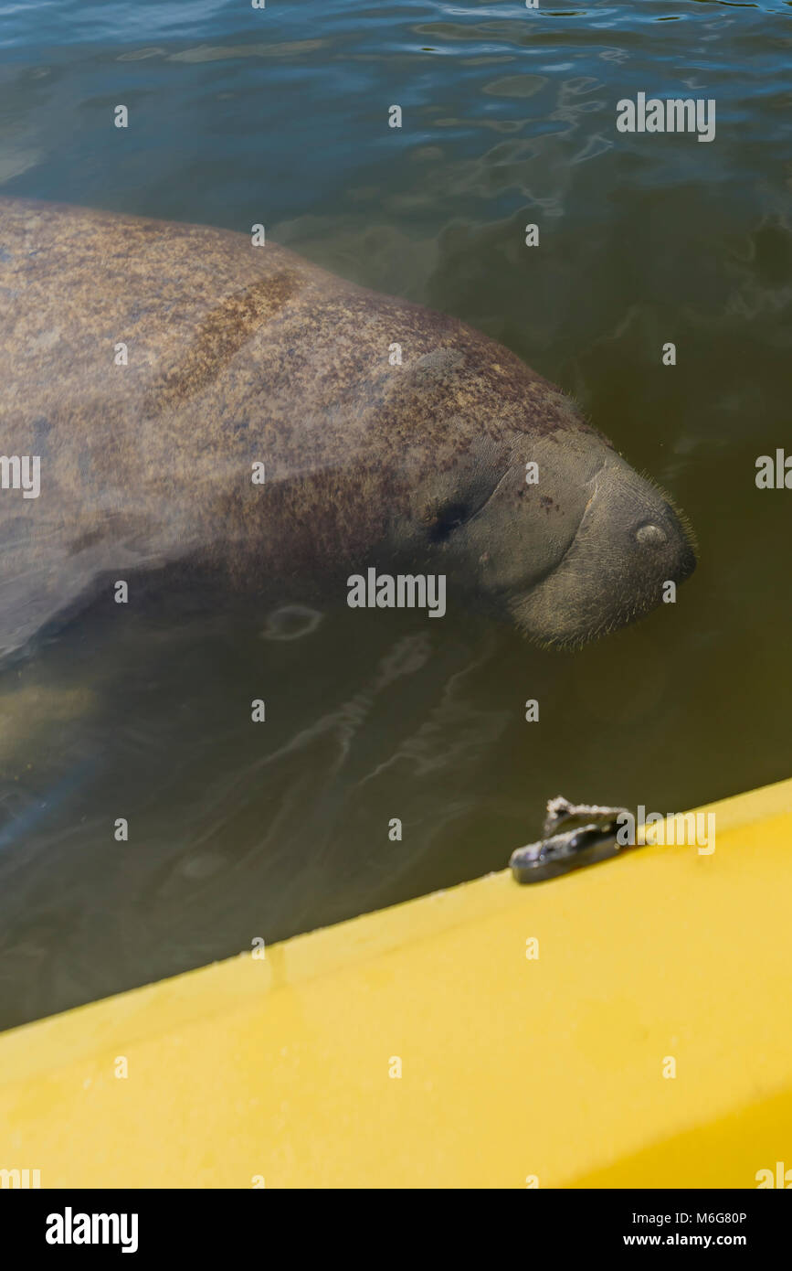 USA, Florida Fort Myers beach, sol, varmt, semester, ledigt, hav, sjö, kajak, plastkajak, båt, paddel, - Stock Image