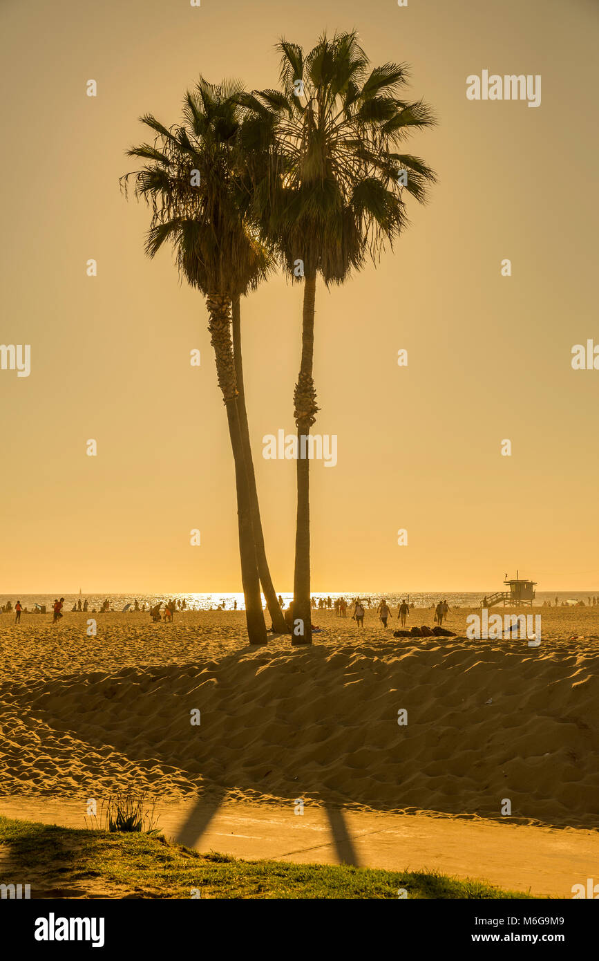 strand, sol, palmer, semester, badvakt, hav, varmt, beach, sun, palm trees, vacation, lifeguard, sea, hot, Stock Photo