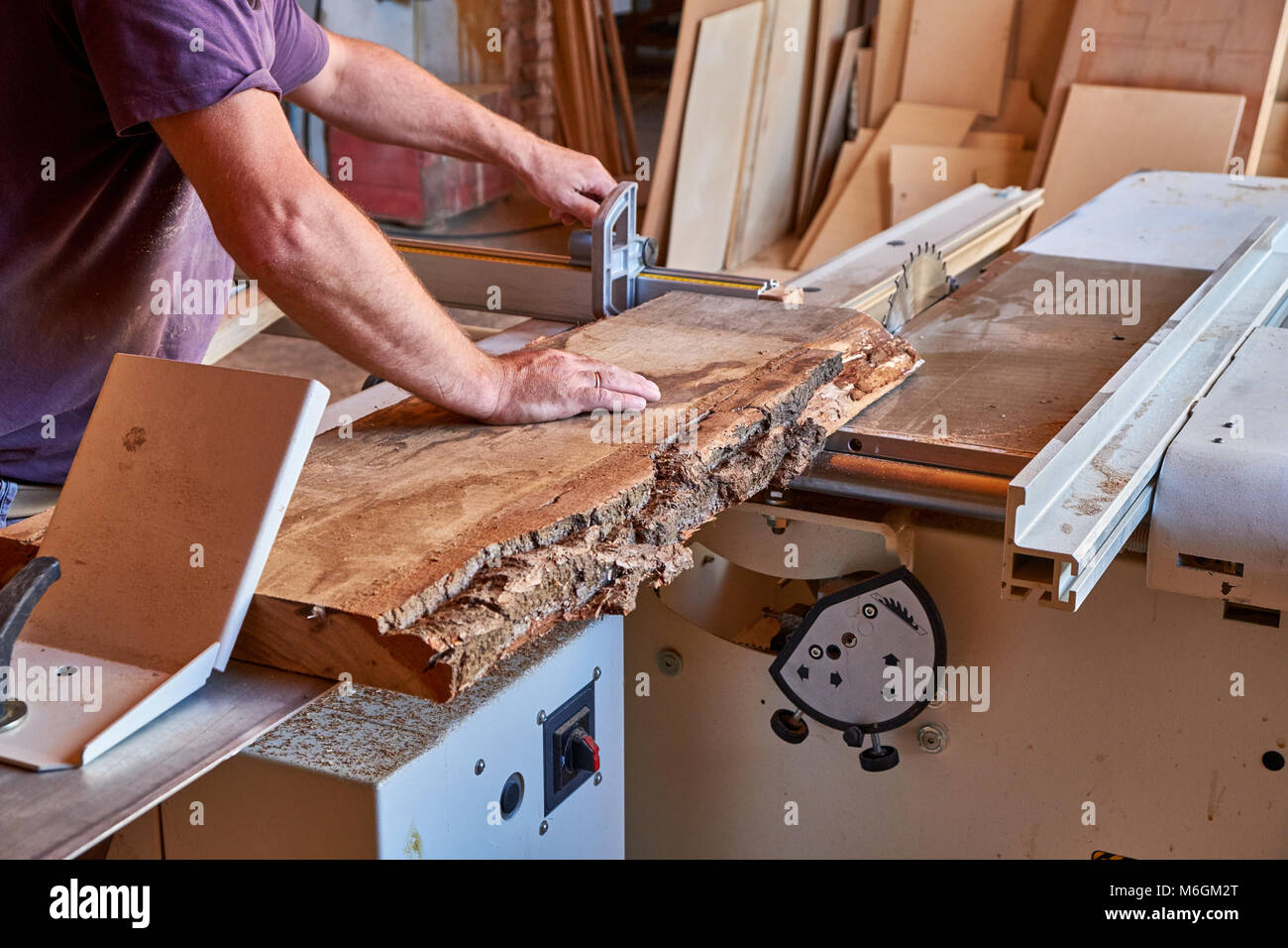 Panel squaring saw before sawing a thick unedged oak board - Stock Image