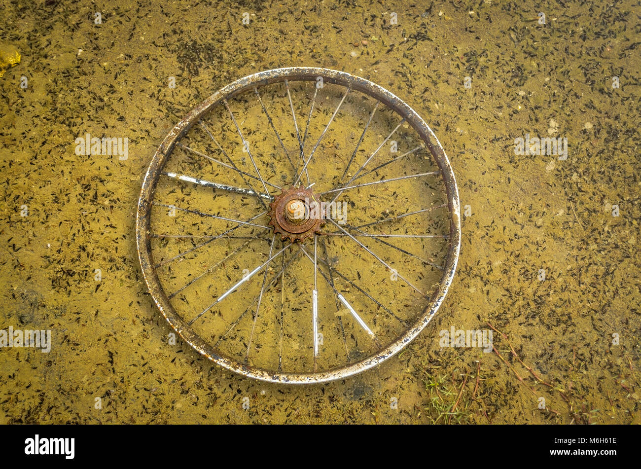 Old, rusty bicycle wheel in dirty water. Water pollution. - Stock Image
