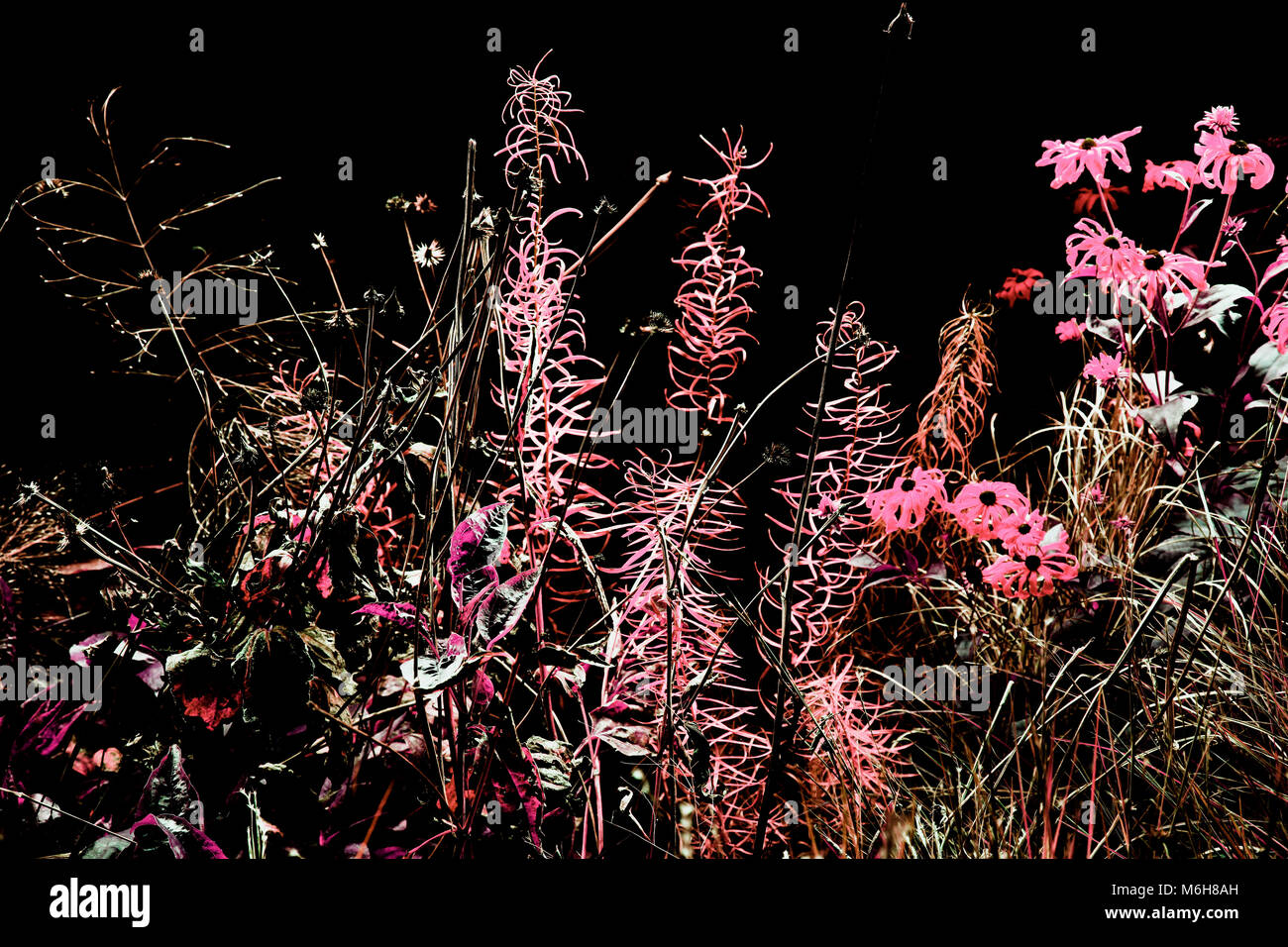 Beautiful Exotic And Wild Flowers And Plants Shot At Night In