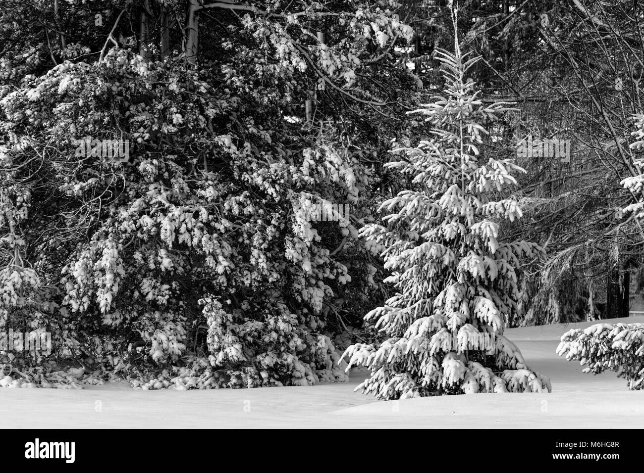 Pinafore Park in St. Thomas, Ontario, Canada is blanked with a fresh snow fall after Mother Nature brought a late - Stock Image