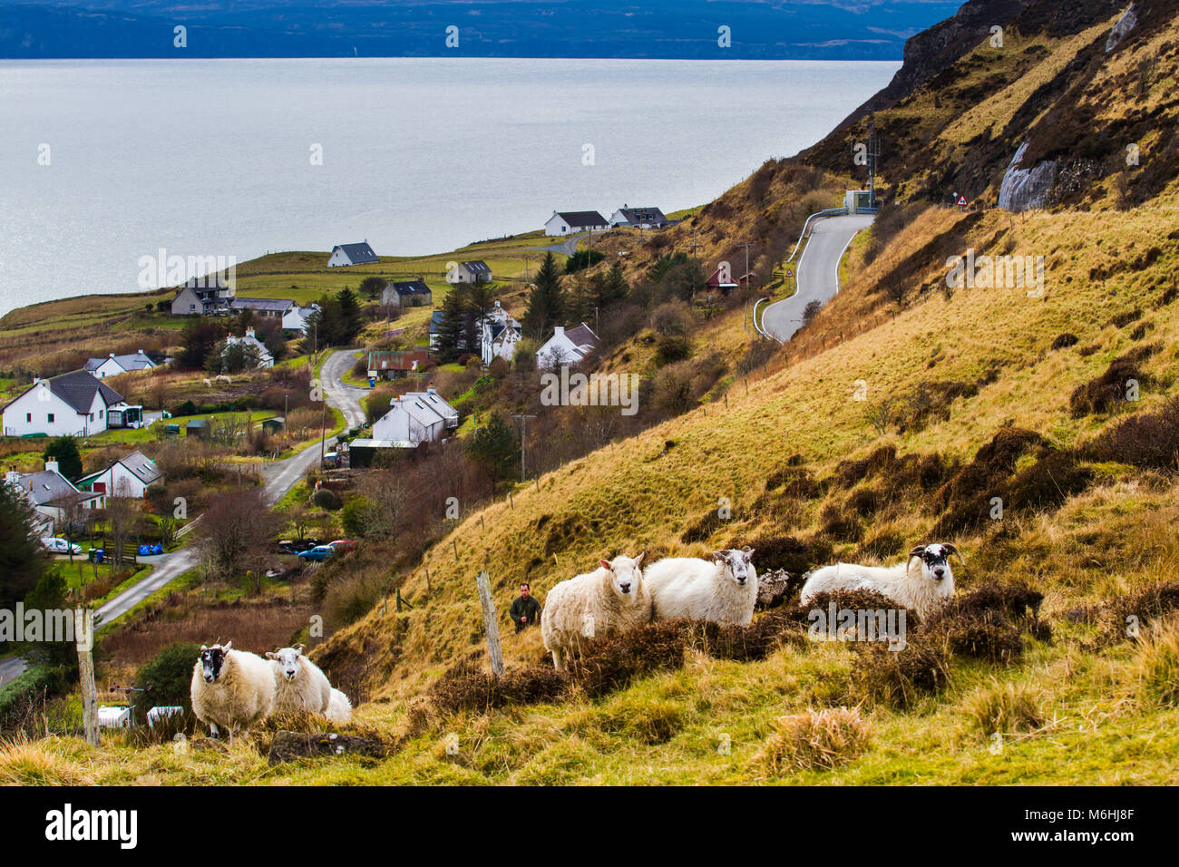 A shepherd and his sheep in the hills of the Isle of Skye. - Stock Image