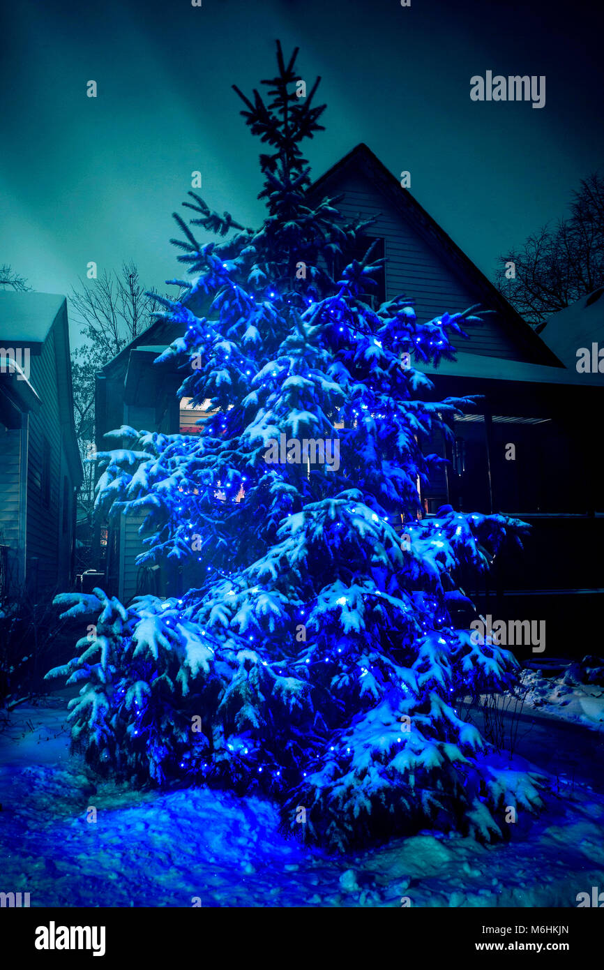 Christmas Tree Lights Snow Outdoor Stock Photos Christmas Tree