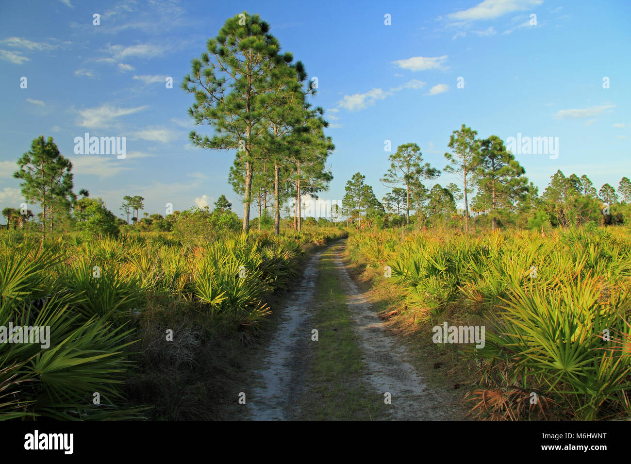 Scenic Subtropical Landscape in Big Cypress National Preserve in the Florida Everglades Stock Photo