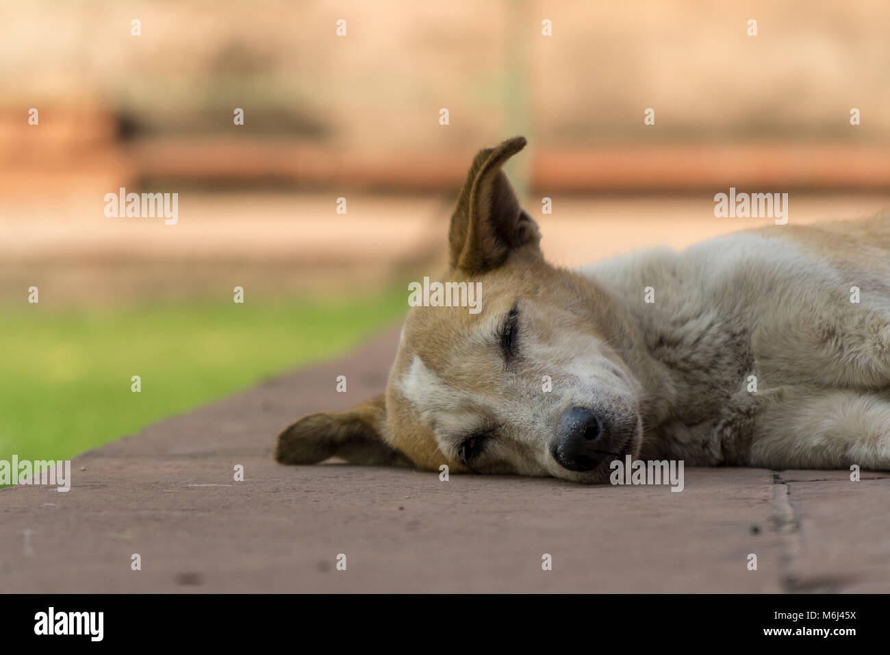 Dog Sleeping - Stock Image