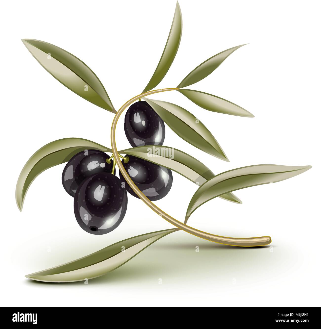 Transparent Black olives branch on a branch, eps is editable, place over any backkground - Stock Vector