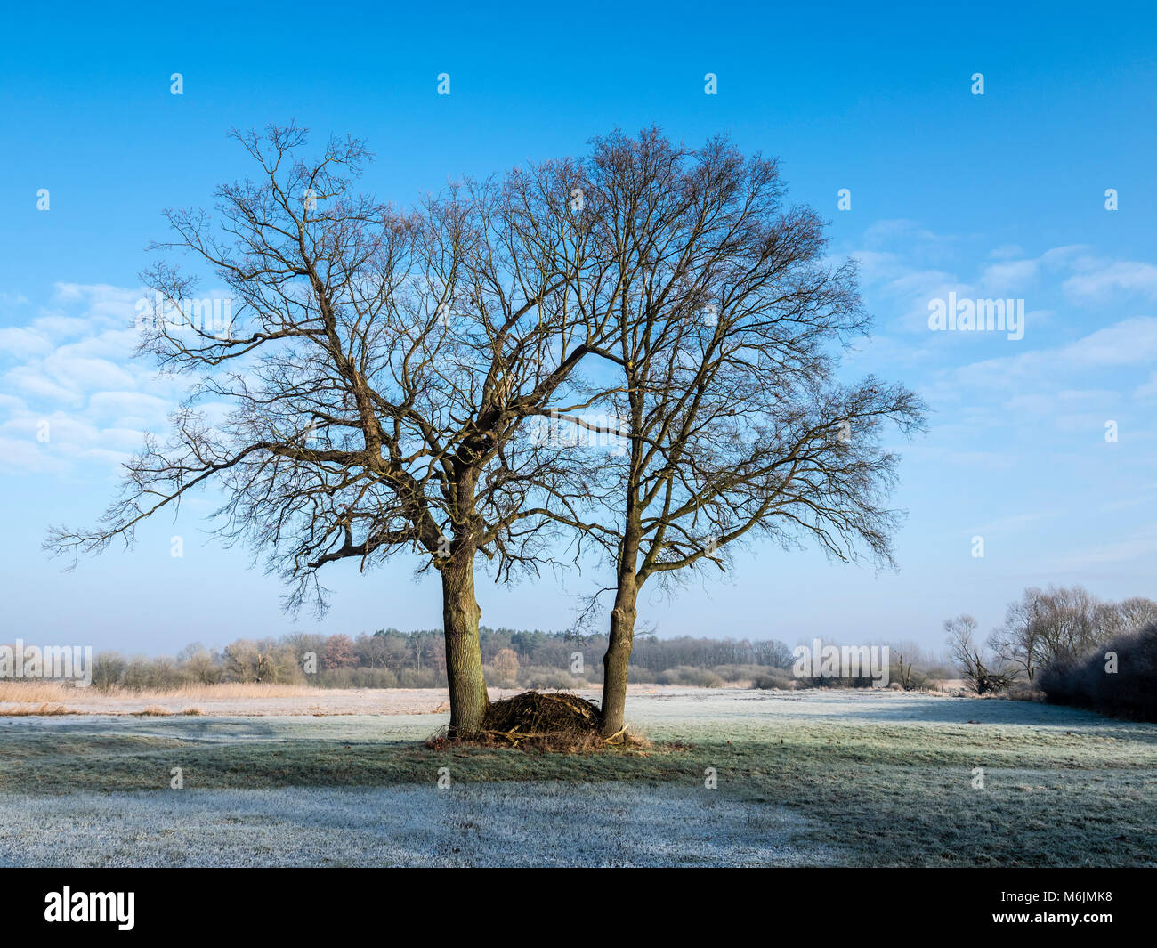 Trees on a frozen meadow at the Aller cycle path, river Aller ,  between Celle and Altencelle, Germany Stock Photo