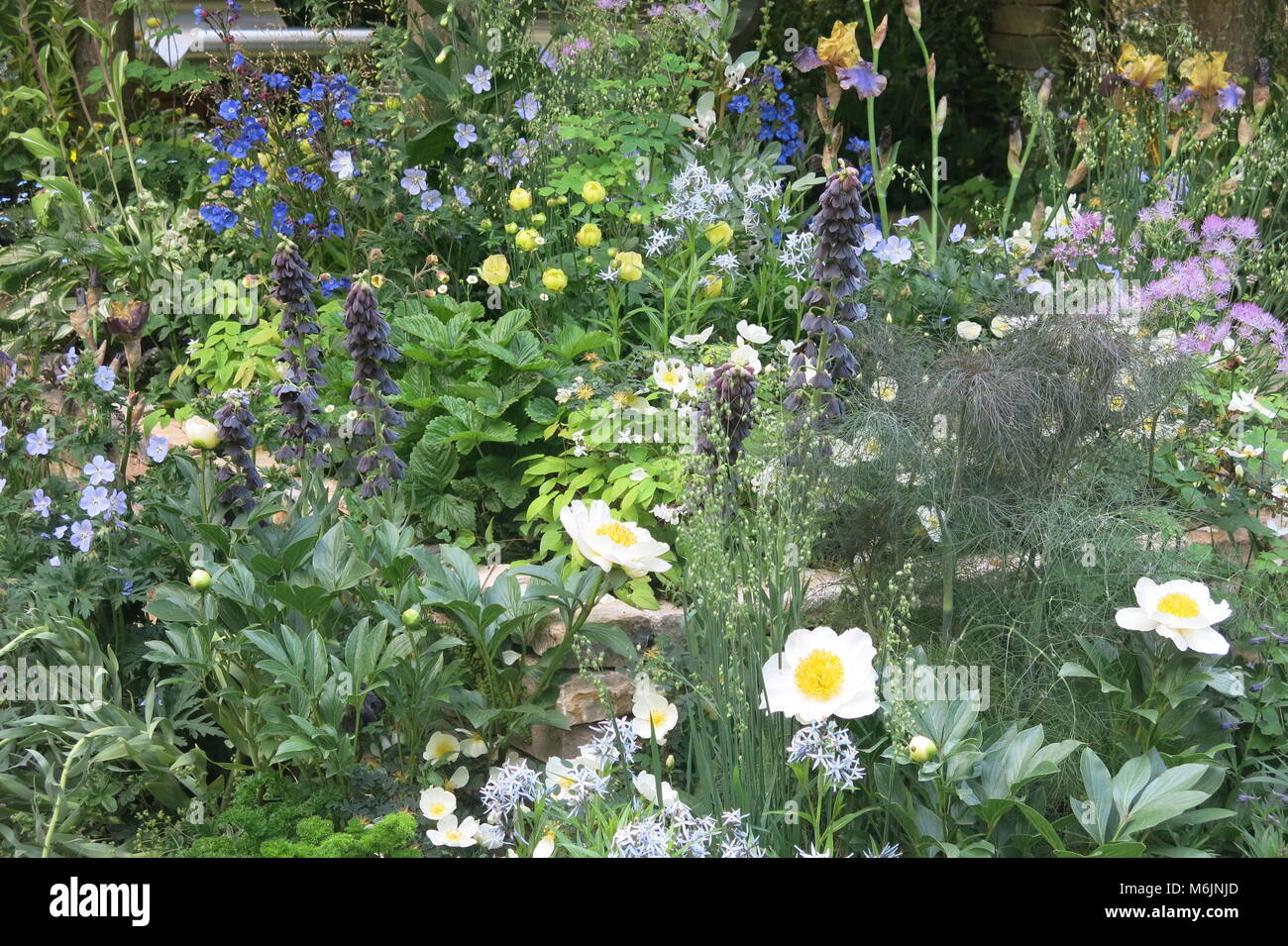 Summer colour from the show gardens at the RHS Chelsea Flower Show, May 2017 - Stock Image