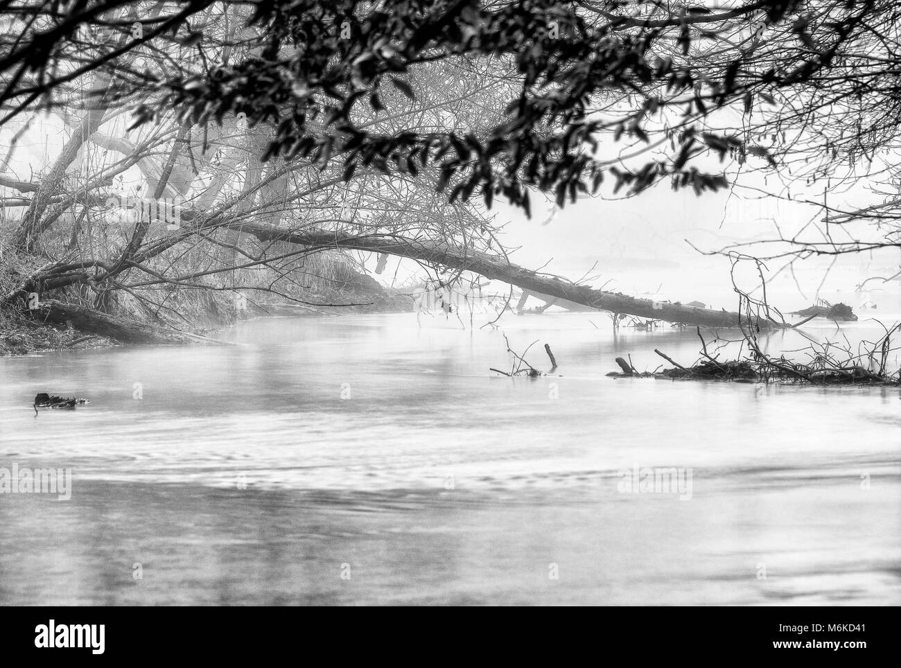 winter landscapes over the Ticino riverbanks - Stock Image