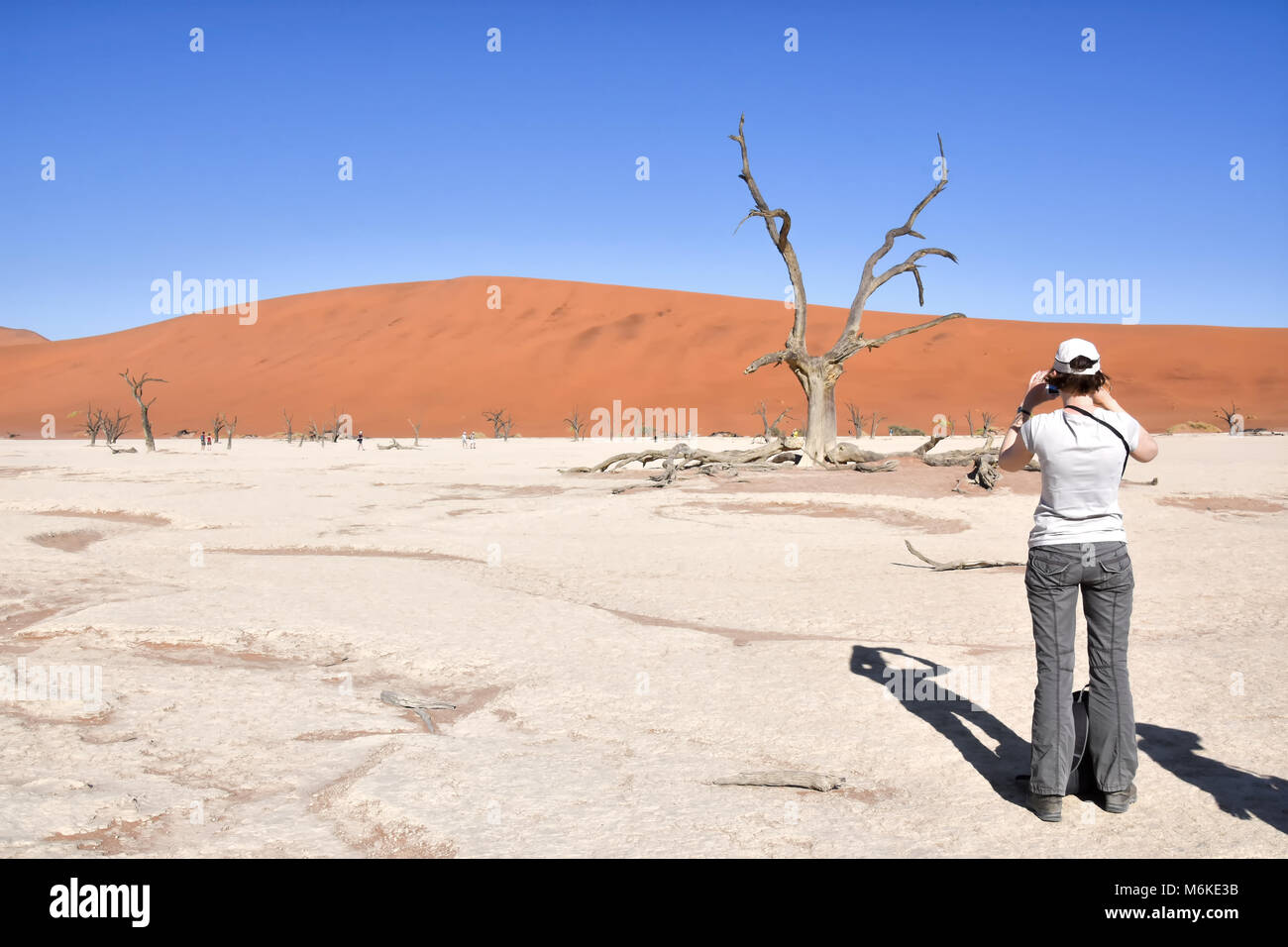 Female tourist taking a photo standing near trees in the dead or dry lake near the famous sand dunes in the Namib - Stock Image