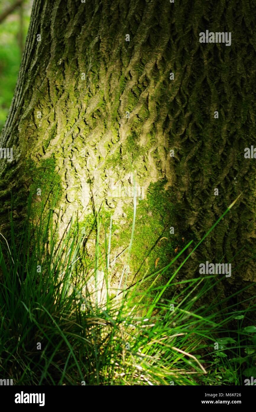 Mottled Tree Bark Stock Photos & Mottled Tree Bark Stock Images - Alamy
