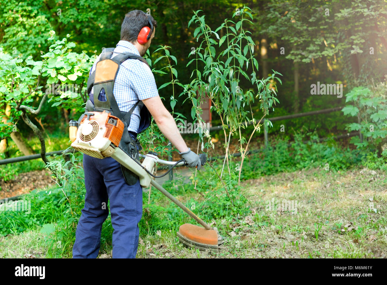 Professional gardener using an edge trimmer in the home garden - Stock Image
