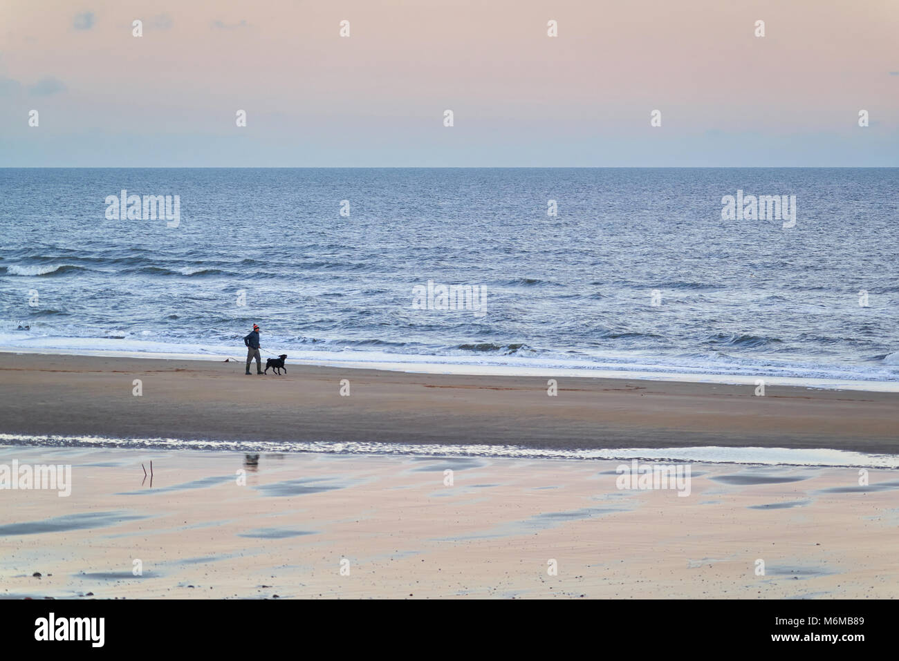 A Person walking the Dog one winters evening along the Beach in Arbroath. The Pink chilly sky reflects the last - Stock Image