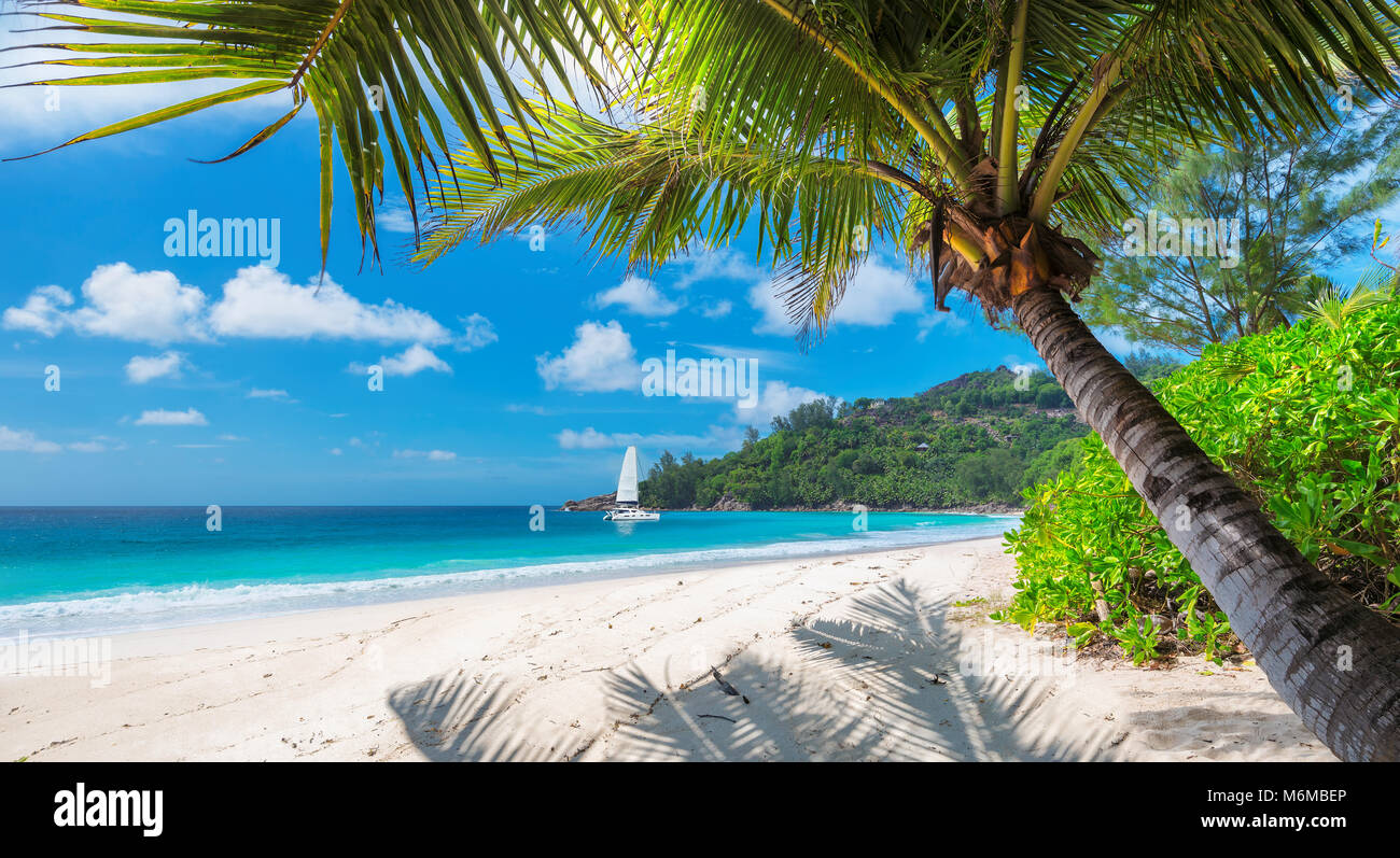 Tropical beach with palm and a sailing boat in the sea - Stock Image