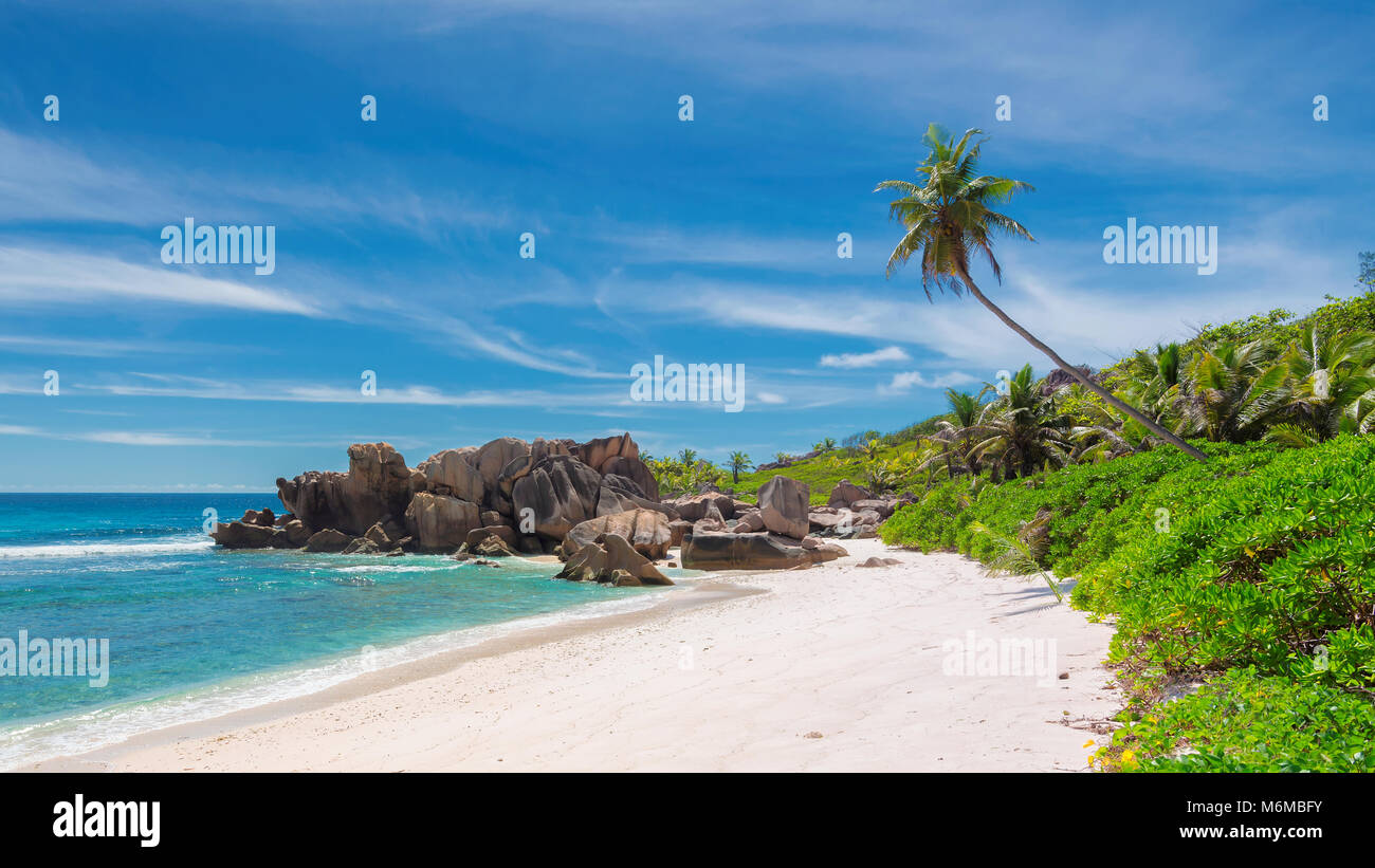 Rock and palms on Tropical beach - Stock Image