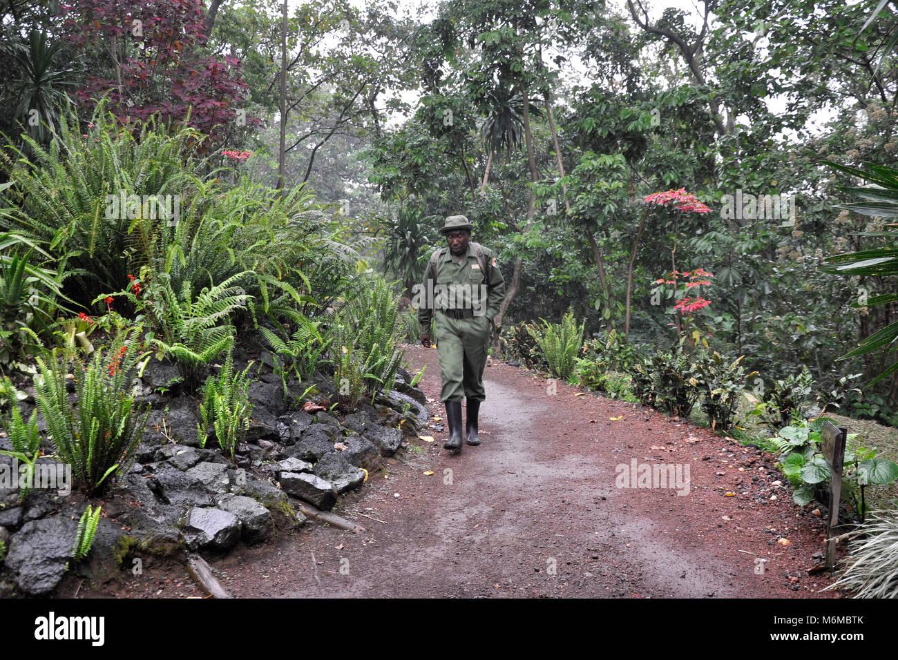 Democratic Republic of Congo, Virunga National Park - Stock Image
