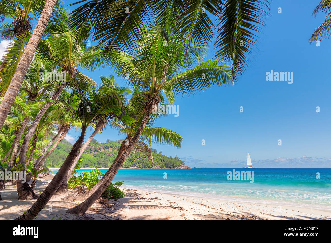 Sandy beach with palm trees and a sailing boat in the turquoise sea on Paradise island - Stock Image