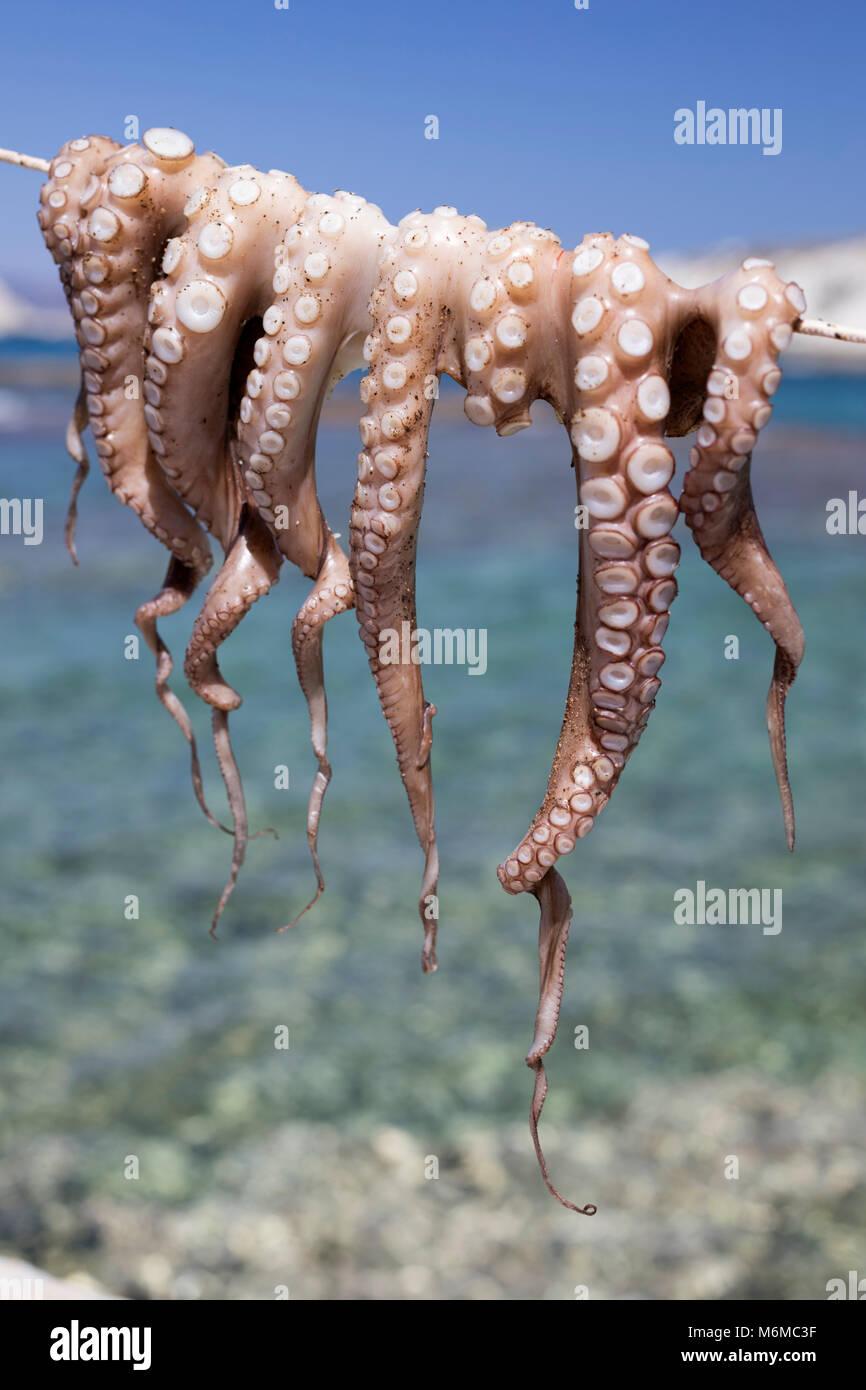 Drying Octopus, Mandrakia, Milos, Cyclades, Aegean Sea, Greek Islands; Greece; Europe - Stock Image
