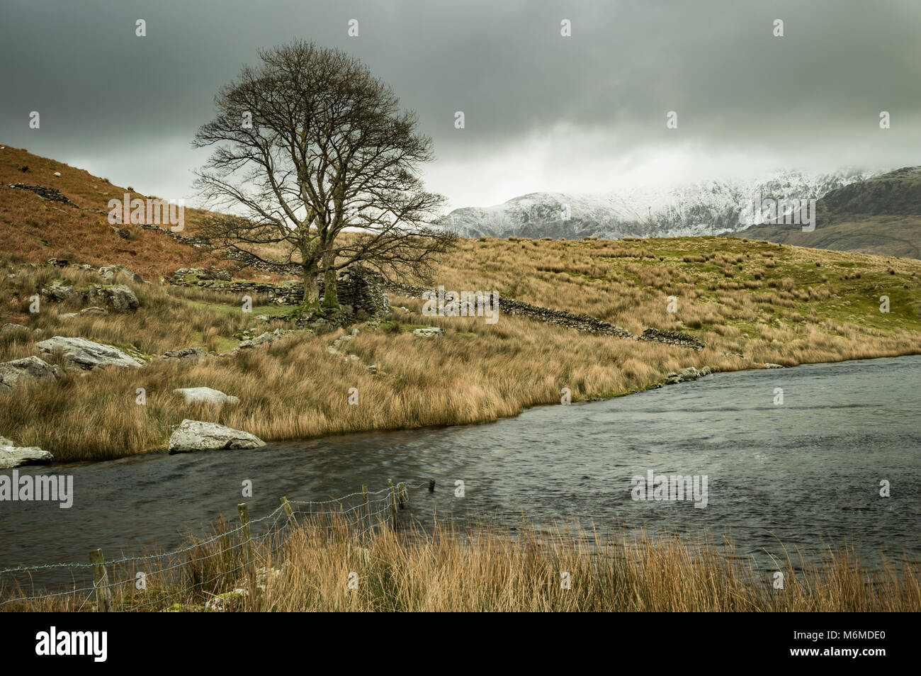 A lone tree by Llyn Dywarchen in the Snowdonia National Park, with a submerged fence and ruined farm wall. A foreboding - Stock Image
