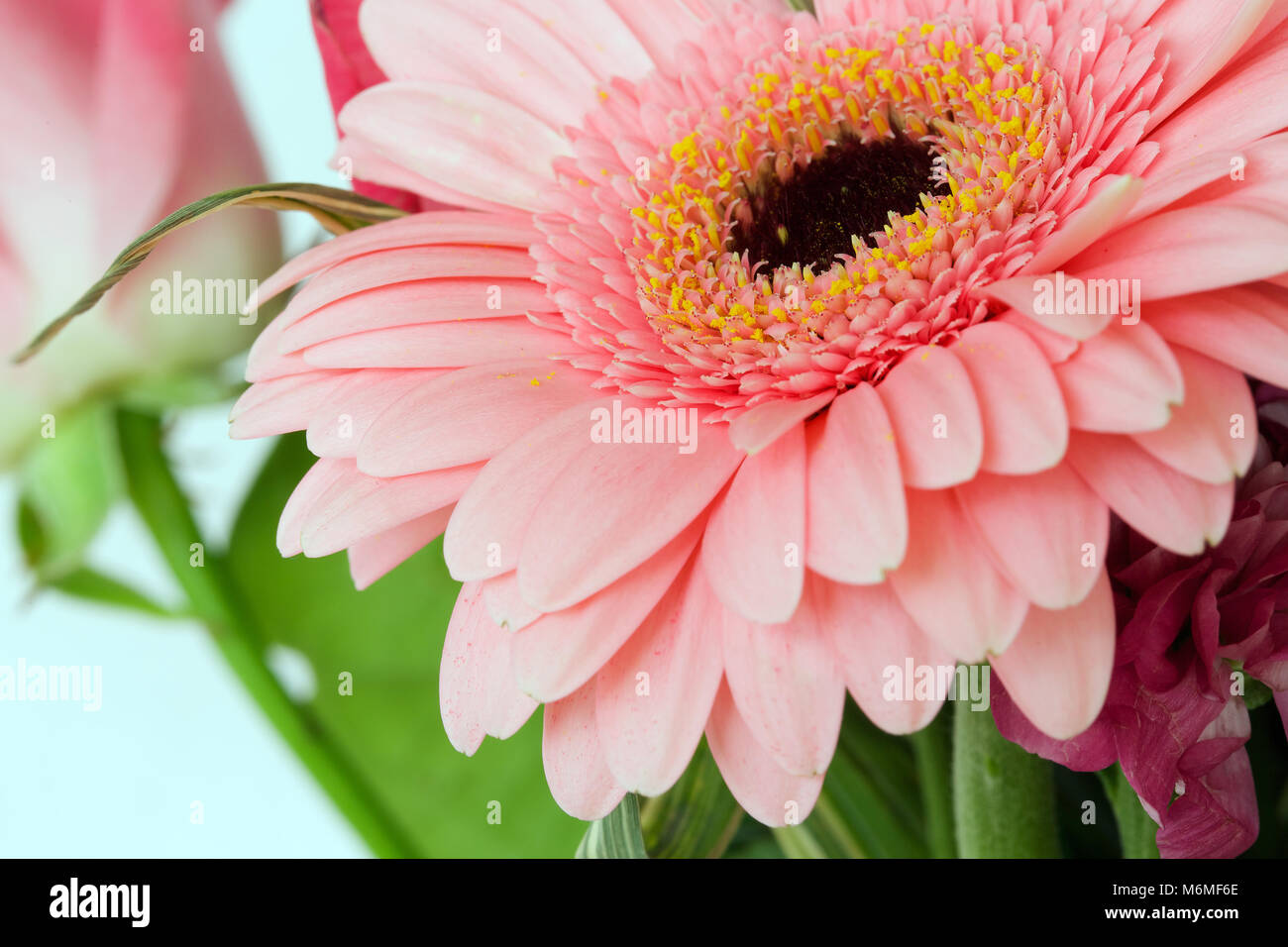 Long Thin Petals Stock Photos Long Thin Petals Stock Images Alamy