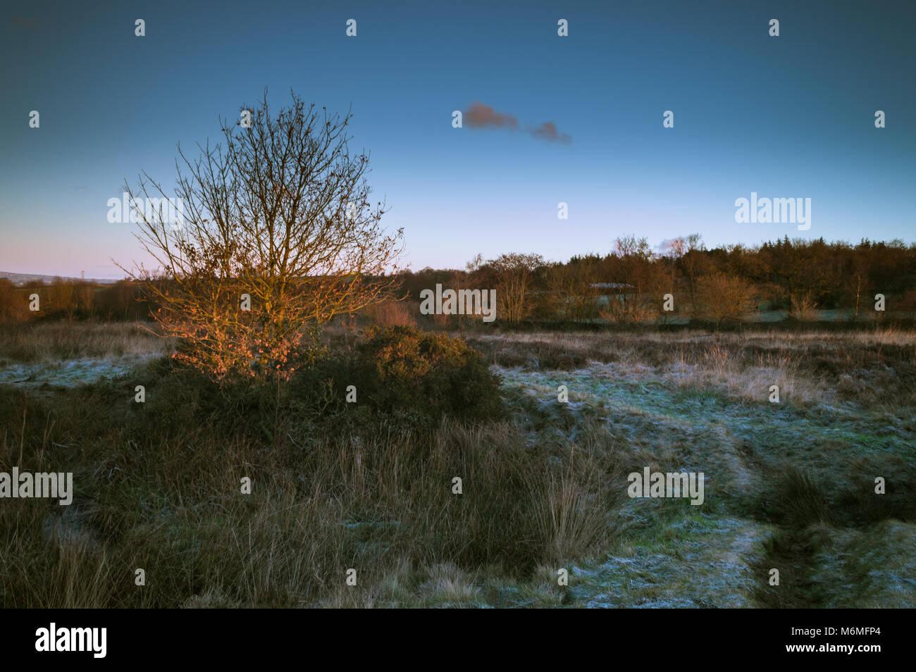 Golden dawn light breaking on a lone tree on a frozen Wetley Moor in Staffordshire. - Stock Image