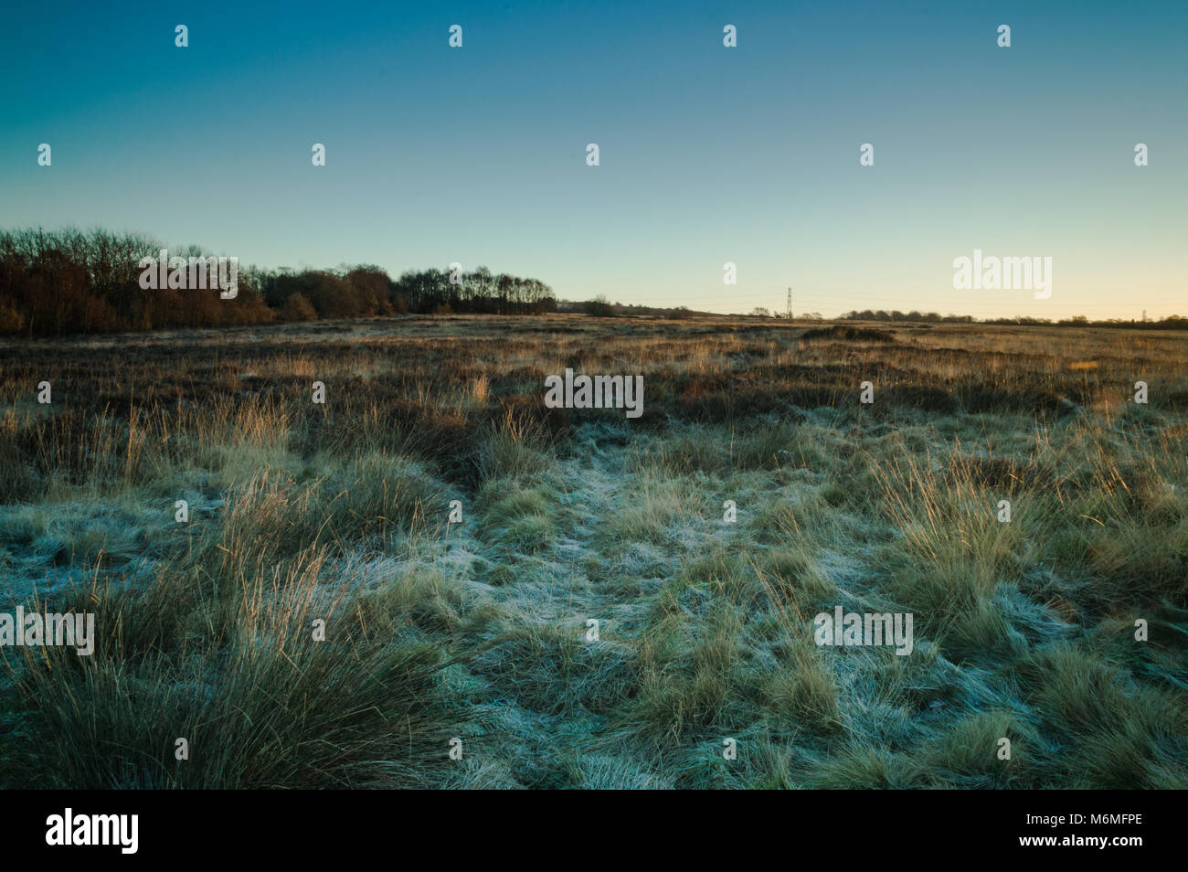 Golden dawn light breaks across the top of the grass on a frozen Wetley Moor in Staffordshire. - Stock Image