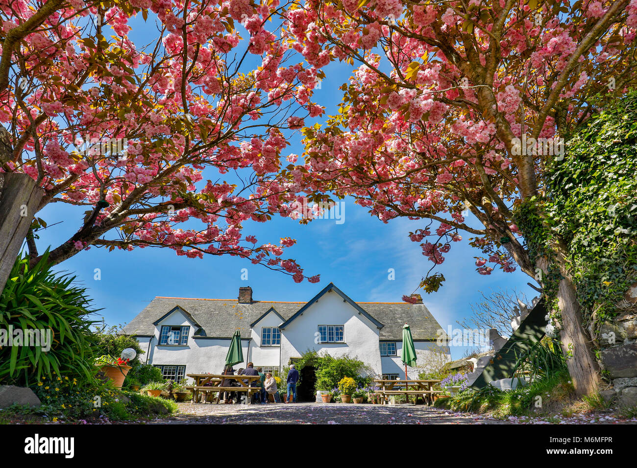 Morwenstow  Rectory Tea Room; Cornwall; UK - Stock Image
