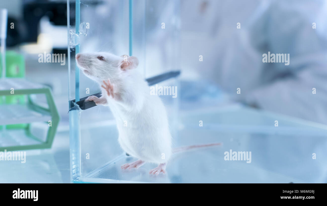 Laboratory Mouse Cage Stock Photos & Laboratory Mouse Cage