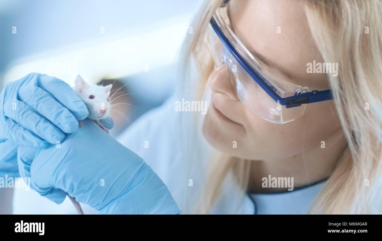 Medical Research Scientist Holds Laboratory Mouse. She Works in a Bright and Modern Laboratory. - Stock Image