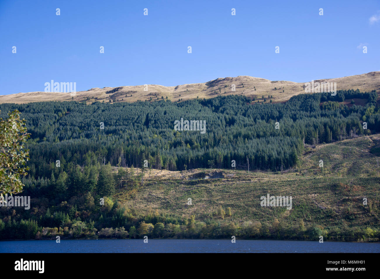 A plantation of evergreen trees on a mountainside by the banks of Loch Lubnaig, Sterlingshire, Scotland, UK. - Stock Image