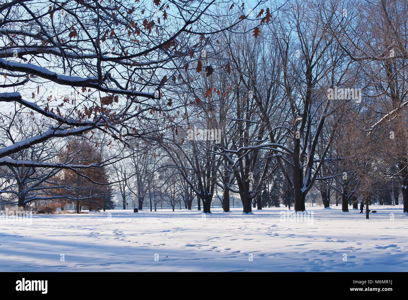 Snow covered trees on a clear winter day, Commissioners Park, Ottawa, Ontario, Canada. - Stock Image