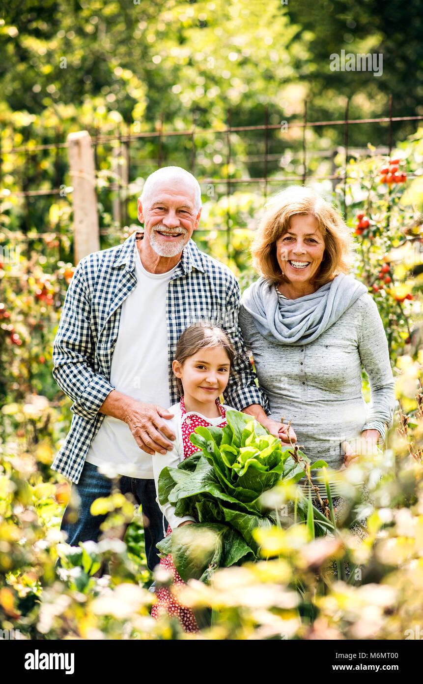 Senior couple with granddaughter gardening in the backyard garden. - Stock Image