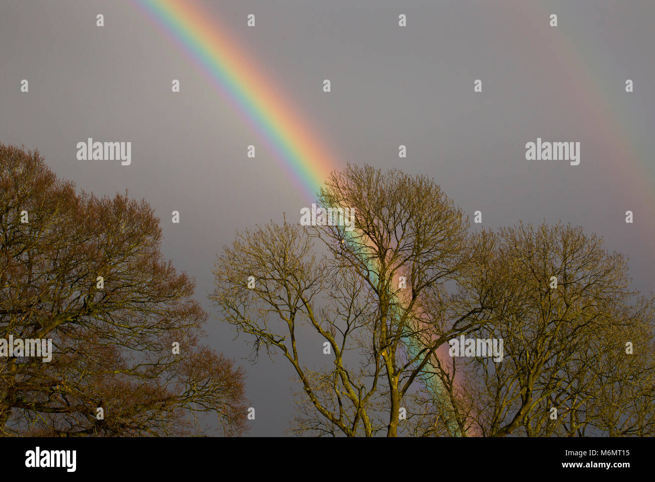 A rainbow behind trees in the UK - Stock Image
