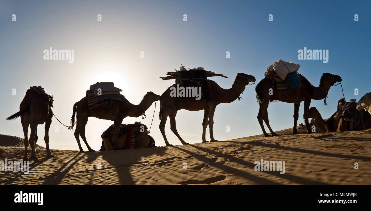 Camels in the Sand dunes desert of Sahara, South Tunisia - Stock Image