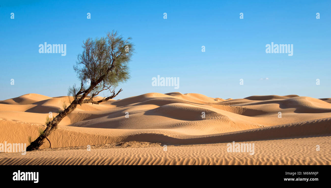 Sand dunes in the desert of Sahara, South Tunisia - Stock Image