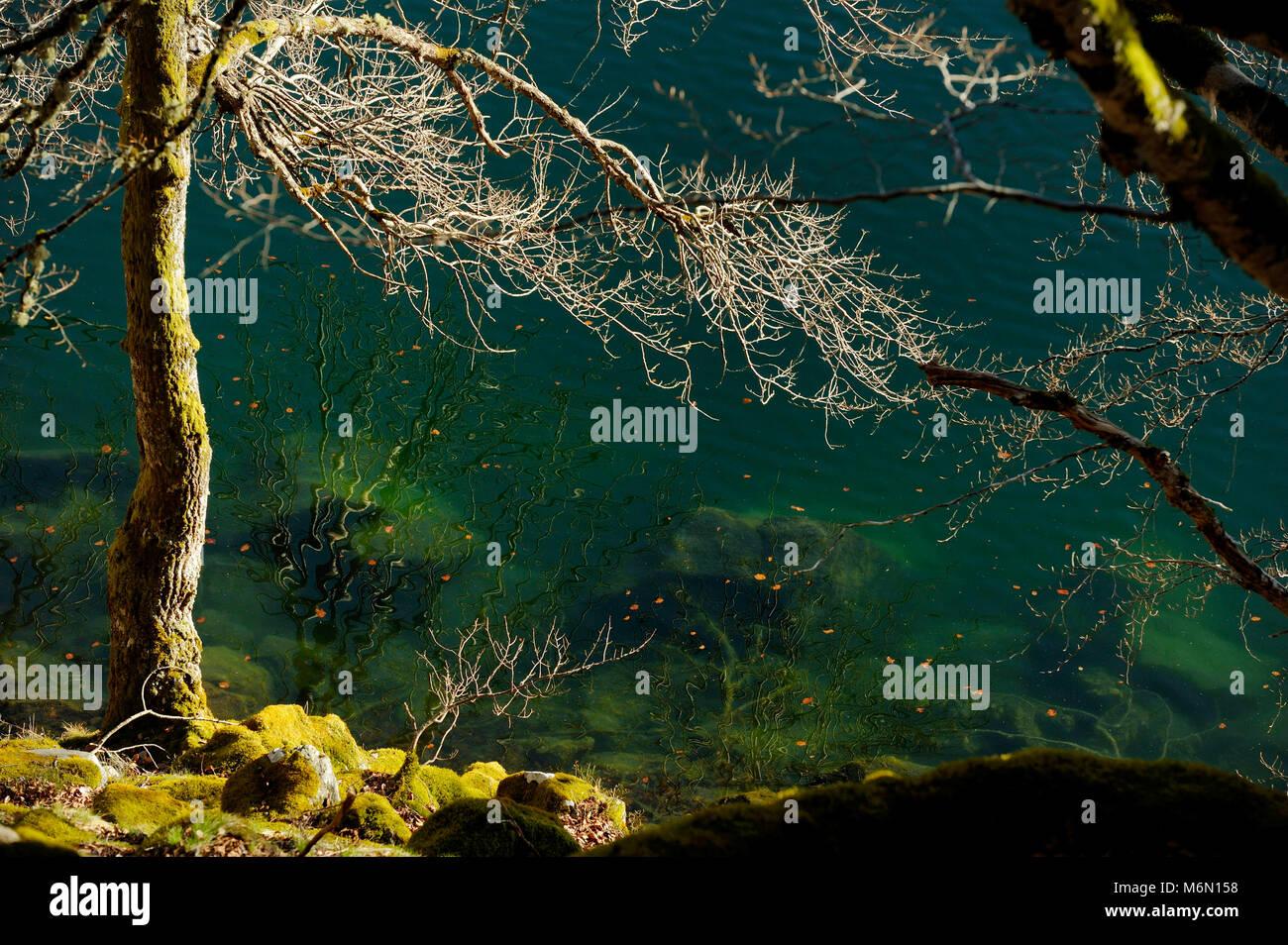 Paimpont Forest or Broceliande Forest: the Fairy Mirror (ÒMiroir aux FeesÓ) - Stock Image